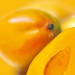 Sorbet mangue